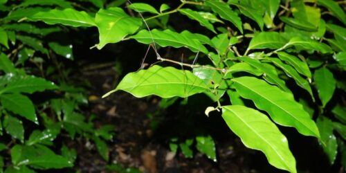 Qué hacer en Monteverde