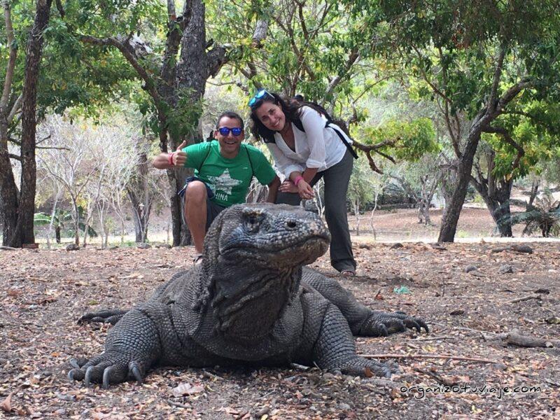 Tour dragón de Komodo 🥇 Alquilar un barco en Flores con agencia local