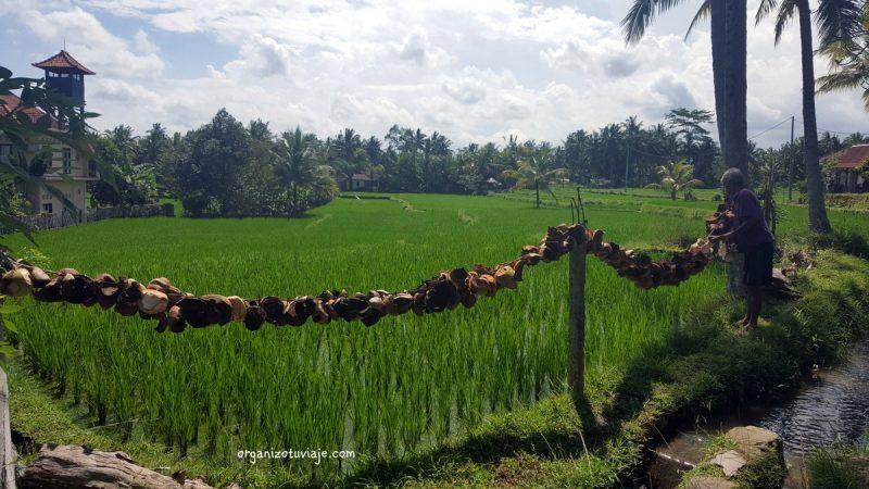 qué ver en Ubud