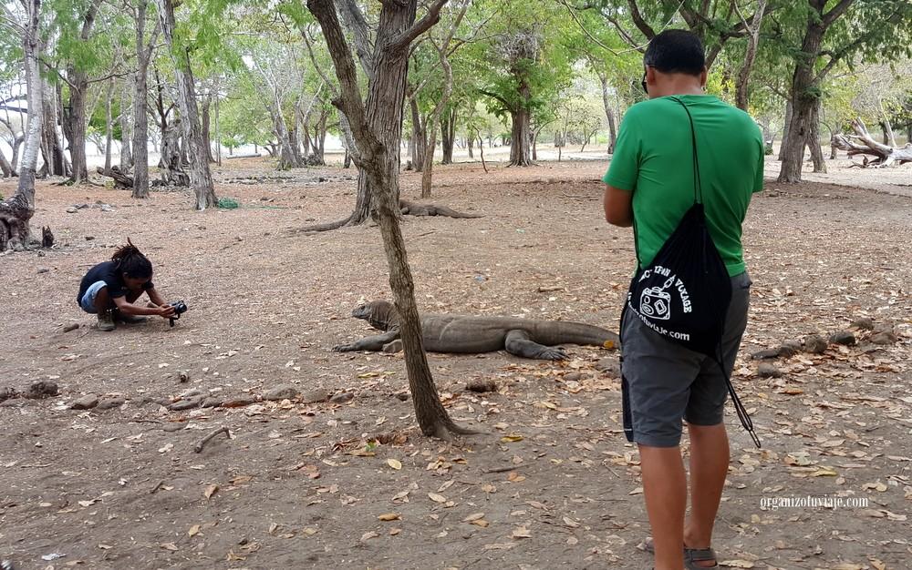 dragon de Komodo en Indonesia