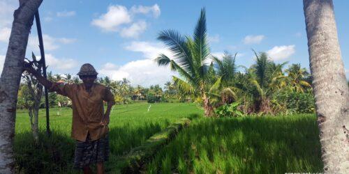 Ubud Bali en 1 o 2 días: Qué ver y hacer 🥇 [OrganizoTuViaje]