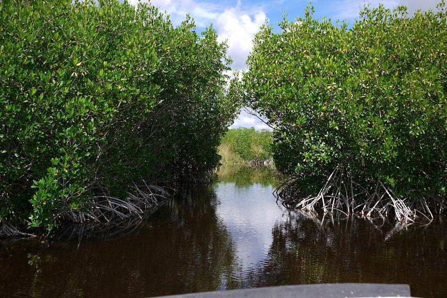 parque nacional everglades fica - photo #5
