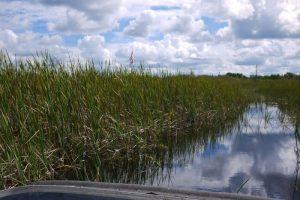 Los everglades de Florida