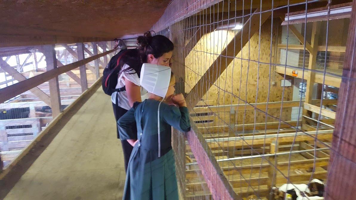 Dónde ver Amish en Estados Unidos