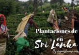Plantaciones de té en Sri Lanka by organizotuviaje.com