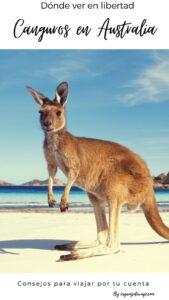 Dónde ver canguros en libertad en Australia by organizotuviaje.com