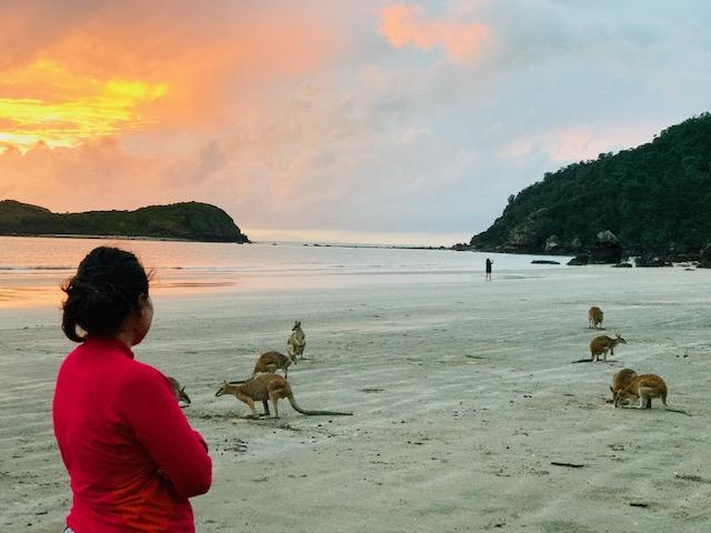playa donde ver canguros en libertad en Australia