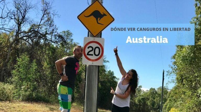 Dónde ver canguros en Australia