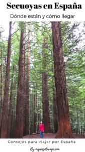Bosque de secuoyas en España. Como llegar