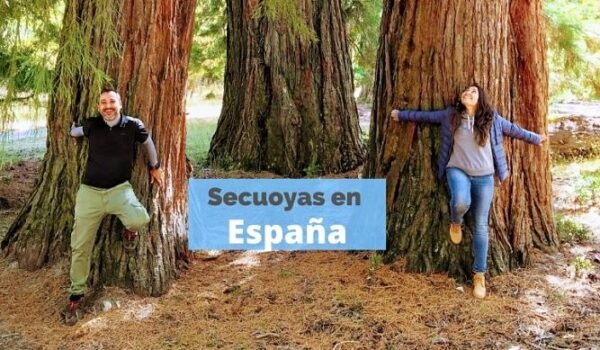 secuoyas en España